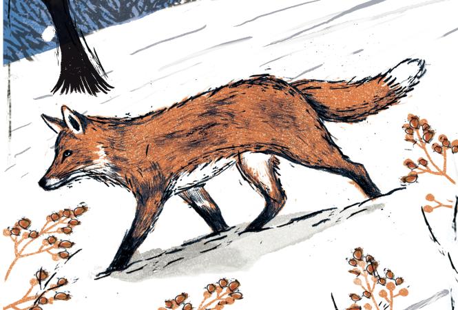 Row3_Fox